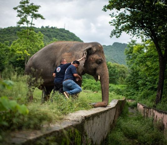 Kaavan elephant going free