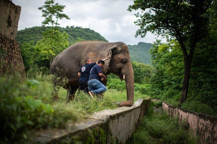 Kaavan elephant going free