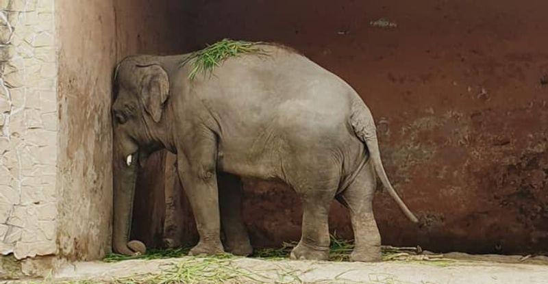 Kaavan in his enclosure at Marghazar Zoo