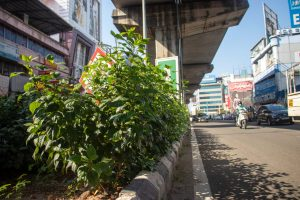 The median beautification