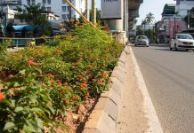 The median beautification is part of Kochi metro's endeavour to have a zero-carbon footprint. system