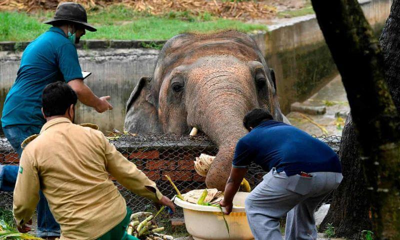 World's loneliest elephant Kaavan