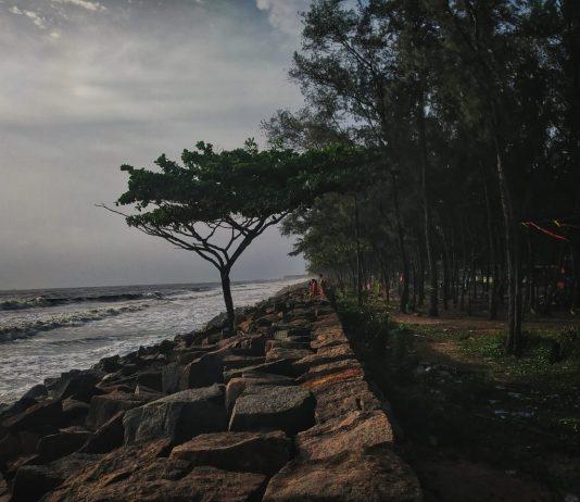 ചെറായിബീച്ചിലെ കാറ്റാടി മരങ്ങളുടെവേലി