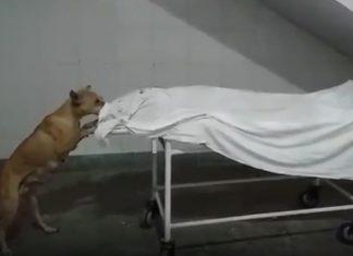 dog nibbling women body in UP