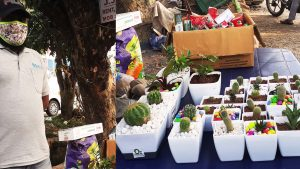 sale of indoor plants in panampilly nagar