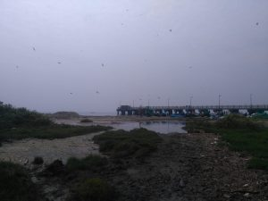 LNG Terminal, PuthuVype