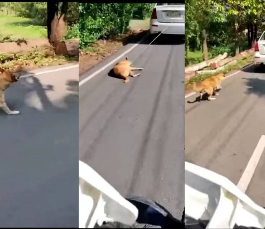 Dog tied to car dragged on road