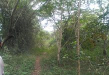 HMT forest, Kalamassery