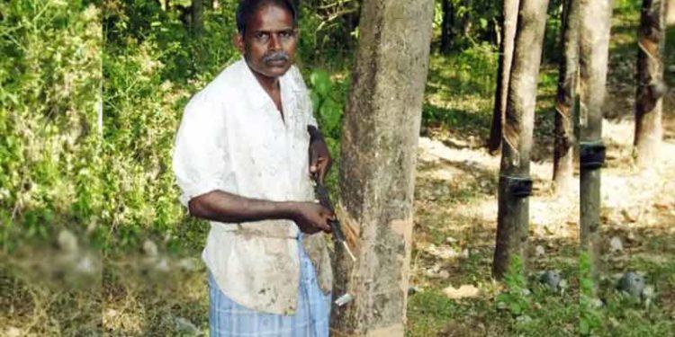 Kerala Xmas New Year Bumper lottery winner Rajan is still a tapping worker