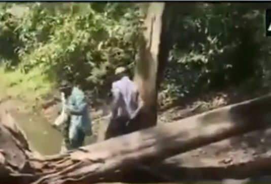 Snake catchers rescued from King Cobra bite video viral