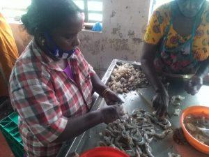 prawn peeling company, Narakkal