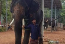 Kollam native Shaji arrested in Mumbai for elephant trafficking