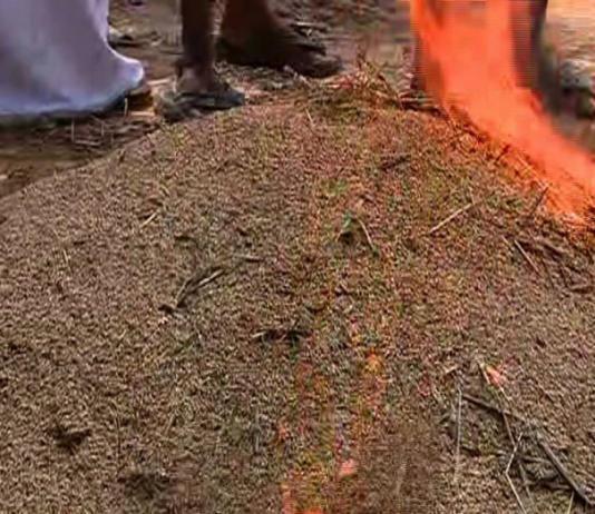 farmers protest in Kottayam by burning crop